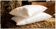 Goose Feather Down Pillows